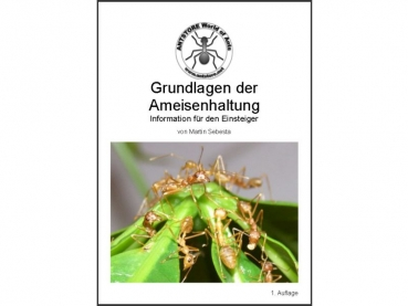 Grundlagen der Ameisenhaltung
