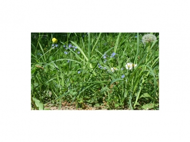 Photo Background - meadow - 25x15 - crosswise