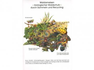 ANTSTORE - Ameisenshop - Ameisen kaufen - Poster: Waldameisen ...