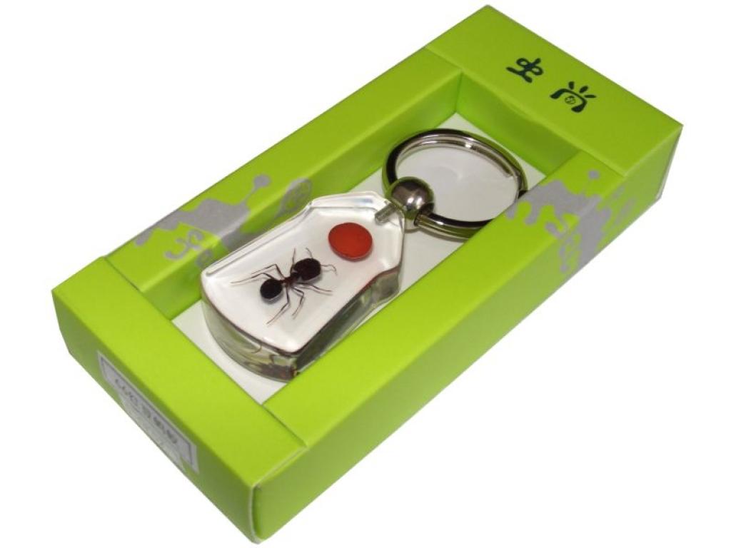 antstore ameisenshop ameisen kaufen ameise in. Black Bedroom Furniture Sets. Home Design Ideas